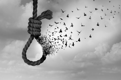 a rope noose disintegrates into various birds flying across the sky
